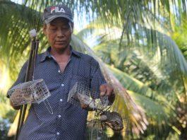 Tiền Giang: Đặt chuột dừa thu nhập tiền triệu mỗi ngày
