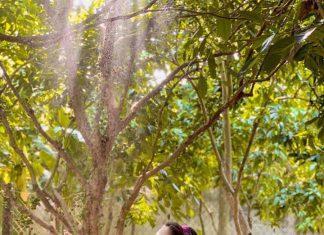 Ngỡ ngàng trước vẻ đẹp dân dã của vườn dâu xanh trĩu quả Đồng Tháp