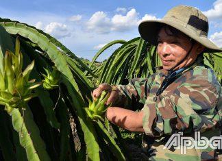 Ông Sơn vẫn hăng say lao động sản xuất, phát triển kinh tế gia đình.