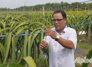 Chú Lê Văn Thủy kiểm tra dây và bóng đèn dùng để xông thanh long.