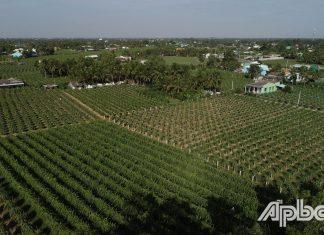 Hiện nay, trên địa bàn huyện Chợ Gạo đã hình thành một số vùng sản xuất chuyên canh.