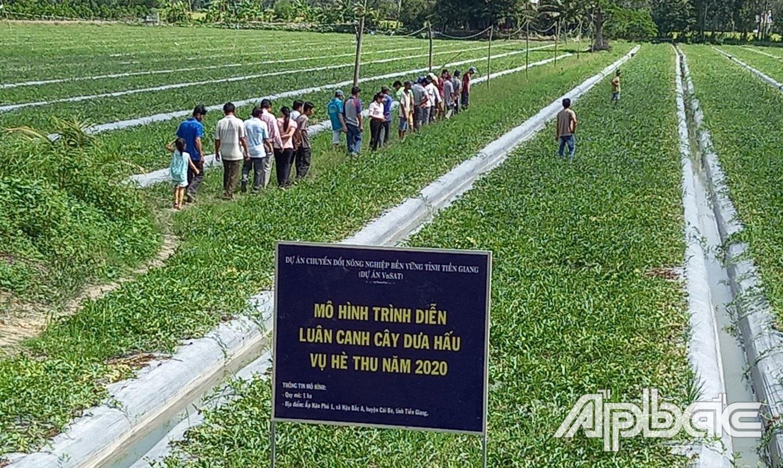 Nhiều nông dân được hưởng lợi từ Dự án VnSAT.