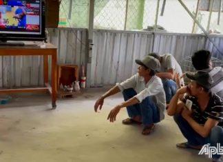 Tiền Giang: Triệt xóa trường gà, bắt 11 đối tượng
