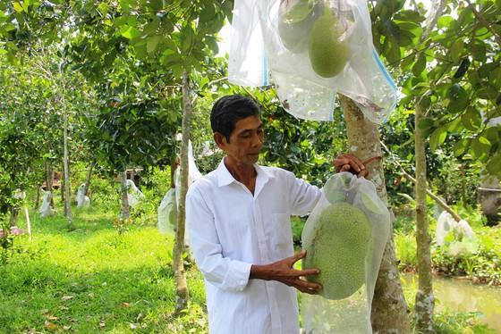 Nông dân thua lỗ vì nhiều loại trái cây rớt giá ảnh 3