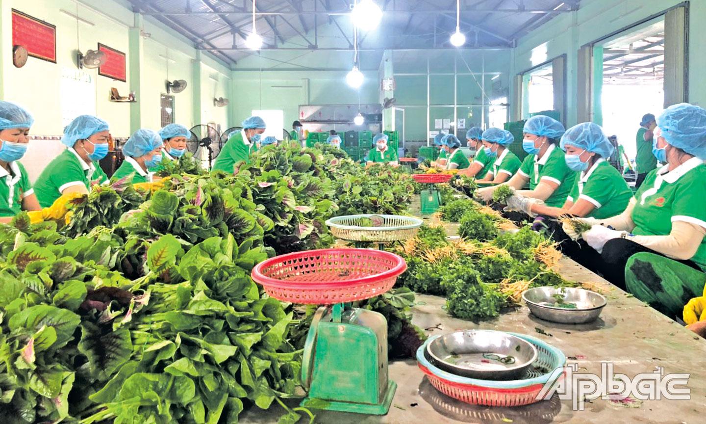 Dù ảnh hưởng của dịch Covid-19 nhưng HTX Phú Quới (huyện Gò Công Tây) vẫn hoạt động ổn định.